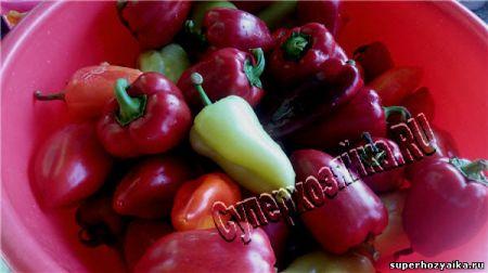 Сладкий болгарский перец
