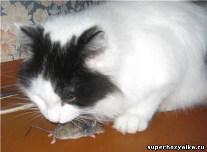 Фомка и мышь