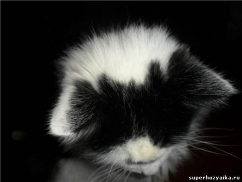 Вот такие ушки-рожки у нашего кота Фомы