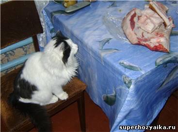 Фомка любит мясо