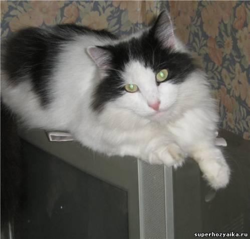 Наблюдательный пункт для кота Фомы
