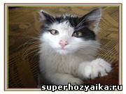 Жизнь и приключения кота Фомы в картинках